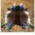 Natural Cowhide Rug- No. 200